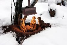 Сурки в зоопарке Гамбурга греются под лампой